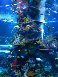Pesci in oceanografico